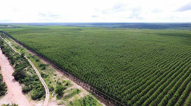 Avanço da monocultura no Maranhão ameaça produção do acampamento Marielle Franco